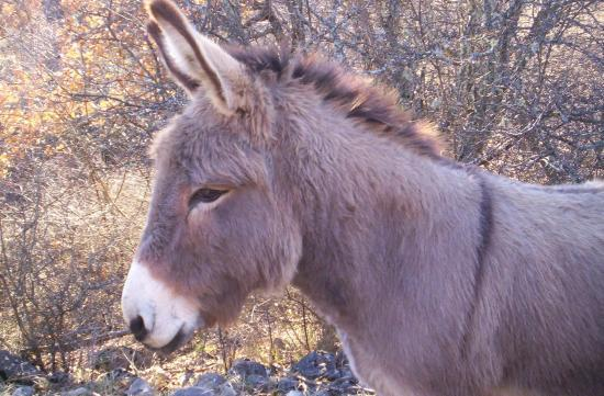 un de nos ânes