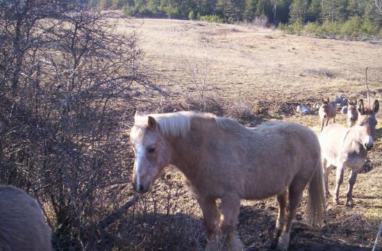 Notre cheval