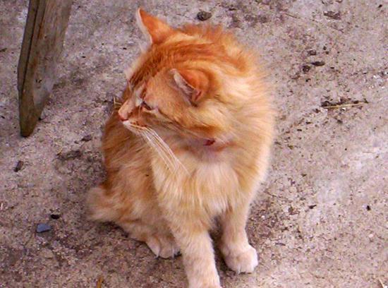 Tigrou, un chat très accueillant